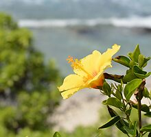 Yellow Blossom by RenieRutten