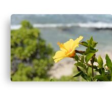 Yellow Blossom Canvas Print