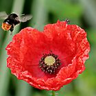 Poppy and Bee in Flight by AnnDixon