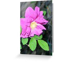 Rugosa rose (églantine) Greeting Card