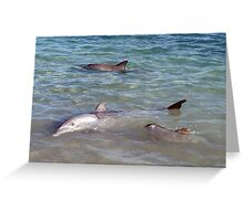 Monkey Mia Dolphin Family Day Greeting Card