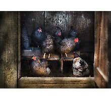 Animal - Chicken - The Hen House Photographic Print