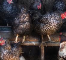 Animal - Chicken - The Hen House Sticker