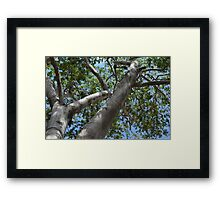 Banyan Tree Framed Print