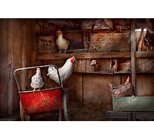 Animal - Chicken - The duck is a spy  Photographic Print