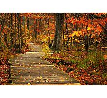 autumn lane II Photographic Print