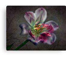 Tulipa laureola Canvas Print