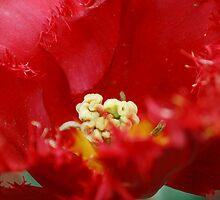 A Different Tulip by Judi Corrigan