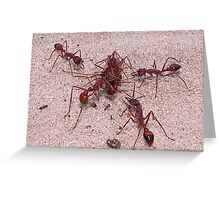 Ant Melee Greeting Card