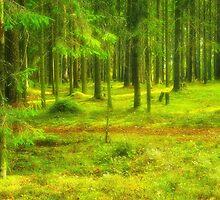 Dreamy Path by Mallorn