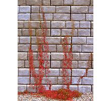Bleeding Wall Photographic Print