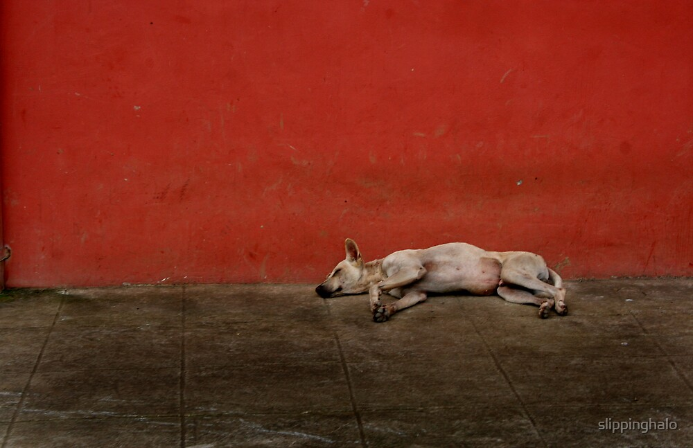 Sleeping Dogs Lie by slippinghalo