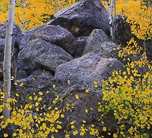 Boulders among the changing leaves by Paul Gana
