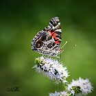 You're My Butterfly by silverdew