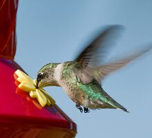 Hummer at the Drive-up Window by Bonnie T.  Barry