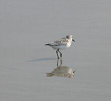 Sandpiper Reflection by Dan Perez