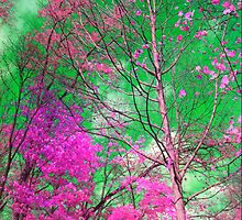 Trees alive in Pink by Pahl