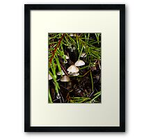 Tiny Kingdom Framed Print