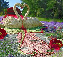Swans by LudaNayvelt