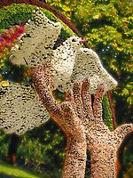 WON the 'Two turtle doves and a pigeon in a bare tree.' challenge of group 'Pigeons and Doves'