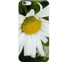 Big Chamomile 4 iPhone Case/Skin