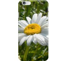 Big Chamomile 5 iPhone Case/Skin