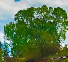 WEEPING WILLOW REFLECTION by kotybear