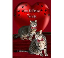 ❁ ♥¸.•*AM I YOUR PURRFECT VALENTINE?❁ ♥¸.•* Photographic Print