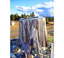 Frosted Stump Photographic Print