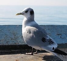 Seagull on the Pier by AustinRae