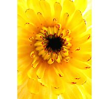 Colourful Calendula Photographic Print