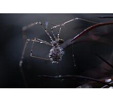 Spider Clan Photographic Print