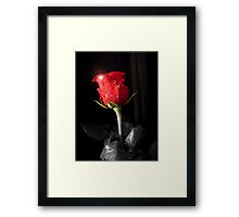 Red Rose 1 Framed Print
