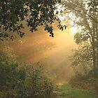 The forest path by Graham Ettridge