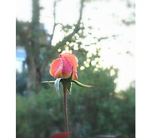 Enchanted Garden - The Rose Photographic Print