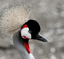 African Crane at Lake Tobias by Lori Deiter