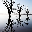 Silent Vigil. by Steve Chapple