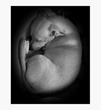 ADORABLE SLEEPING PUPPY!  Photographic Print