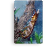Jack the Cockroach Canvas Print