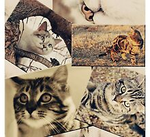 Cat collage by Qnita