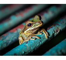 Masked Treefrog on Bridge (Smilisca phaeota) Photographic Print