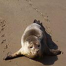 Antoine the Harbor Seal by Judy Olson