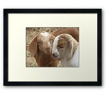 Don't Be Shy Framed Print