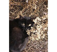 Hiding Cat Photographic Print