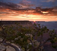 Tree at Sunset South Rim Grand Canyon by EvaMcDermott