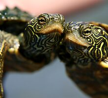 Turtle Hugs by Lori Deiter