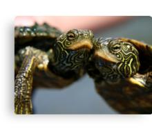 Turtle Hugs Canvas Print