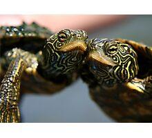 Turtle Hugs Photographic Print