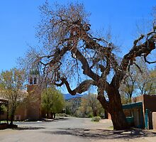 Hanging Tree, Cerrillos, New Mexico by Catherine Sherman