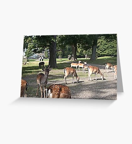 Just a fraction of the herd Greeting Card
